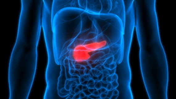 Artist's impression of torso and pancreas scan
