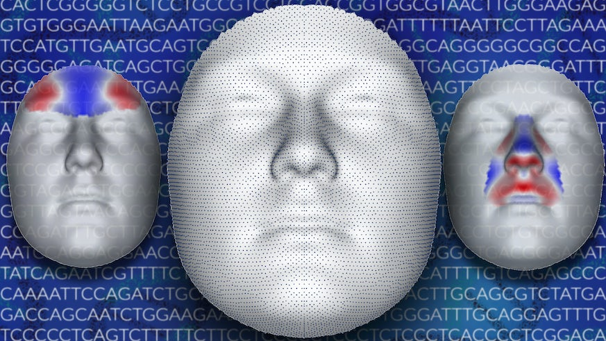 Genetic face map picture