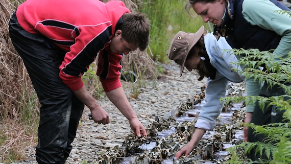 Staff and students check experimental stream equipment