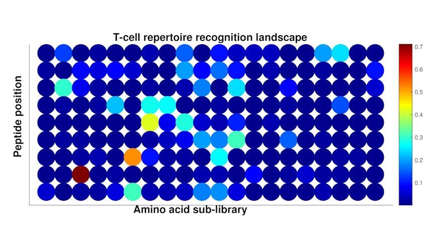 T-cell receptor recognition landscape graph