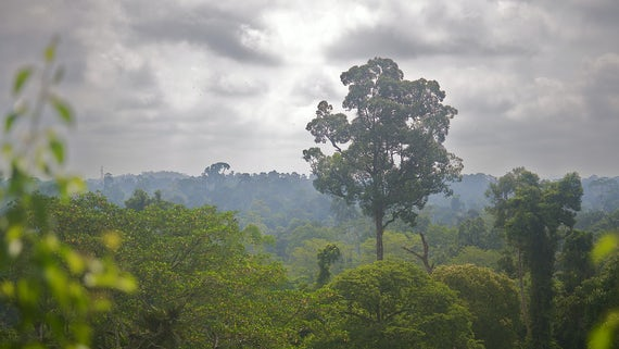 View across the treetops