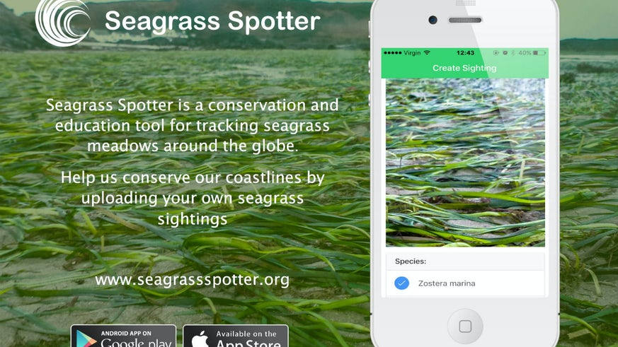 SeagrassSpotter