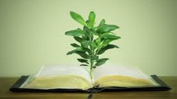An image of a plant growing from a textbook