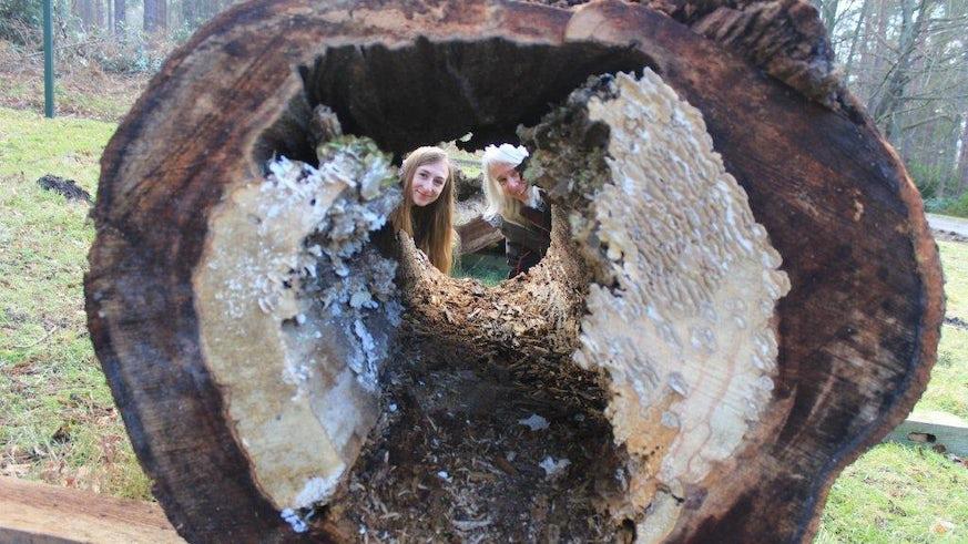 Lynne Boddy Tree Infecting
