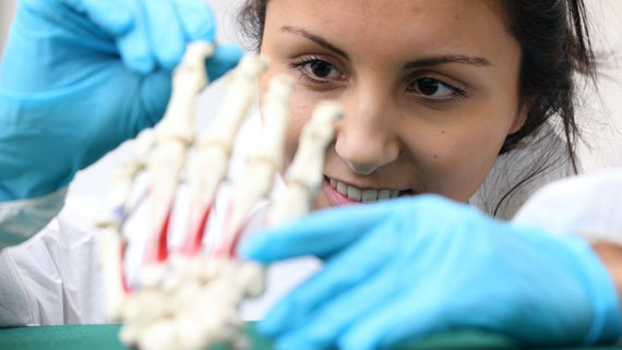 Female student examining a skeleton