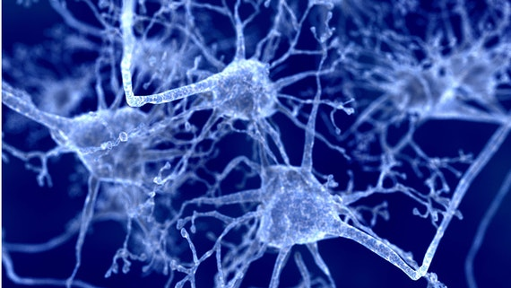 Neurons under a microscope