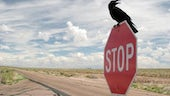 Do birds obey the speed limit?