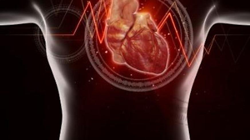 heart protein