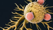 Artist's impression of T-cell