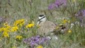 Bird sitting amongst flowers