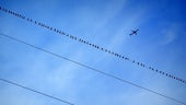 Aeroplane flying high over power cables