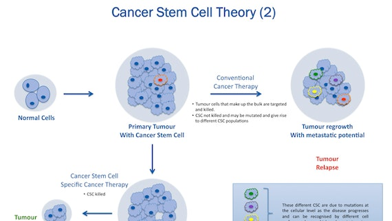 Cancer stem cell theory 2