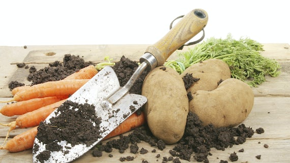 garden tools and vegetables on mud