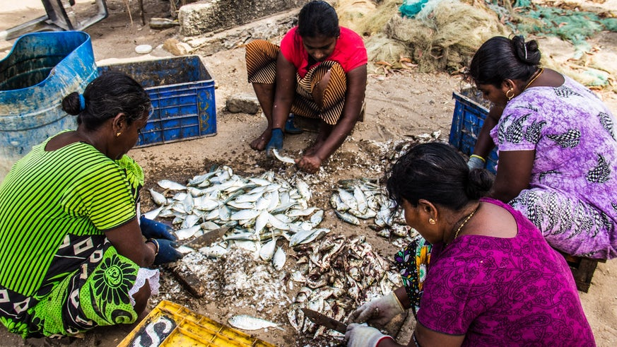 Sri Lanka fish